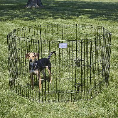 MidWest Exercise Pen : Pet Playpens | 8-Panels Each w: 5 Height Options Ideal