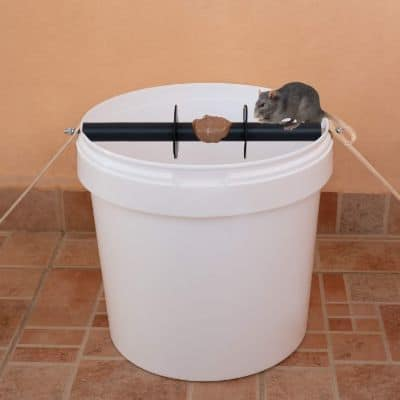 Humane Mouse Catching Kit for Rats, Rodents, Chipmunks, Natural Solution, No Touch Disposal, Reusable